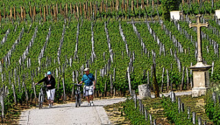 Bicycling through St Emilion vineyards