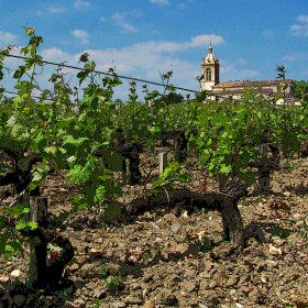 Bordeaux Vineyard with church