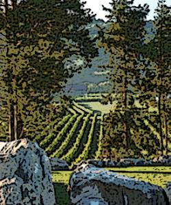 View of Alba Vineyard in the Warren Hills AVA.