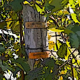 Cabernet Franc & Chambourcin vineyards at Four JG's Orchards & Vineyards in Colts Neck.