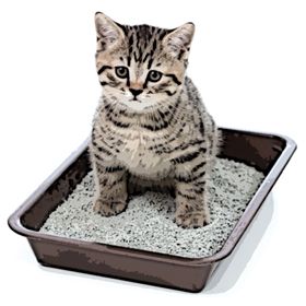 kitten or little cat in toilet tray box with litter