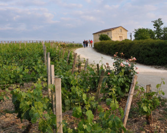 On the Roman Road to Saint Emilion 2