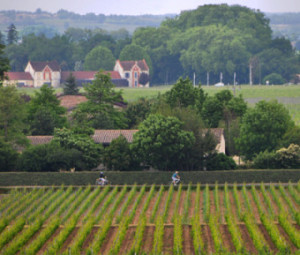 Bicycling past Cabernet Franc vineyards in Bordeaux.